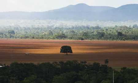 Desmatamento no Cerrado recua, mas em 7 anos é 60% maior que perda da Amazônia Diário do Grande ABC - Notícias e informações do Grande ABC: Santo André, São Bernardo, São Caetano, Diadema, Mauá, Ribeirão Pires e Rio Grande da Serra