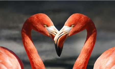 Por que os flamingos são cor-de-rosa? Diário do Grande ABC - Notícias e informações do Grande ABC: Santo André, São Bernardo, São Caetano, Diadema, Mauá, Ribeirão Pires e Rio Grande da Serra