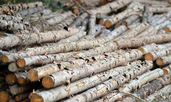 Ação da PF combate extração e comércio ilegal de madeira na Amazônia