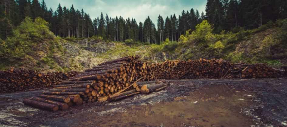 PF: o que destrói a Amazônia é, sobretudo, grilagem e extração de madeira Diário do Grande ABC - Notícias e informações do Grande ABC: Santo André, São Bernardo, São Caetano, Diadema, Mauá, Ribeirão Pires e Rio Grande da Serra